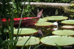 A pond at the entrance gate for the Tropical Spice Garden.