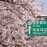The 2016 Yeouido Cherry Blossom Festival in Seoul