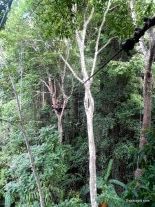 Looking at the next zipline platform at Flight of the Gibbon.