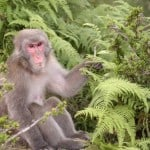 Photo of the Week: A Japanese Macaque at Kyoto's Monkey Park