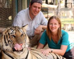 Hugs, Not Drugs at Chiang Mai's Tiger Kingdom
