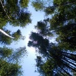 Photo of the Week: Staring Up at a Bamboo Canopy