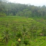 Bali, Indonesia: Welcome to Paradise [Guest Post]