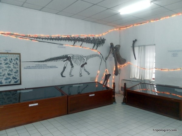 The interior of the Savannakhet Dinosaur Museum with a collection of replica fossils.