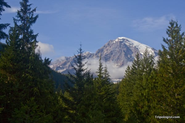 My brief view of Mount Rainier's majestic peak.